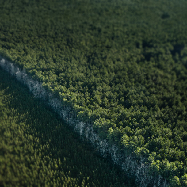 Collection of hidden Wallpapers Apple for Earth Day