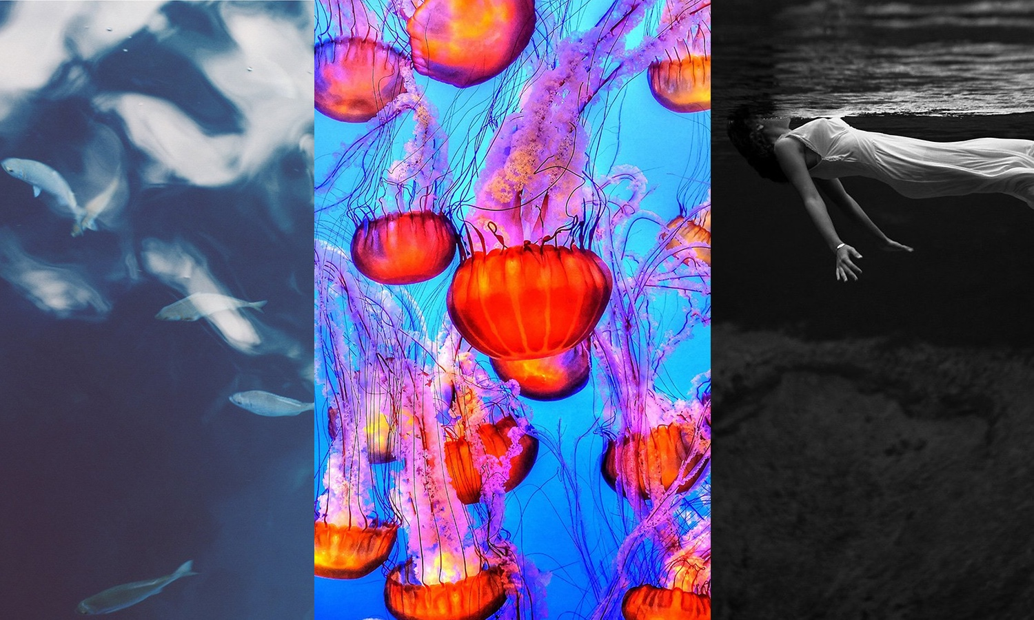 A selection of the best Wallpapers: underwater world