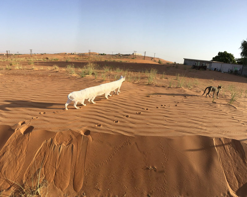 Photofact: bug panorama shooting iPhone turned walking through the desert cat caterpillar